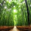 京都散策!嵐山を見て回るなら絶対外せない観光名所はここ!