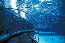 上海海洋水族館上海観光穴場