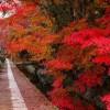 【紅葉を観るならここ!】2016に外せない京都の紅葉観光名所巡り!