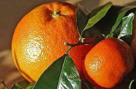 果物狩り-2