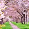 深大寺と神代植物園で花見!桜の見頃は?周辺見所スポットを【画像で紹介】