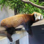 かみね動物園の料金をお得にする割引券はどれがおすすめ?