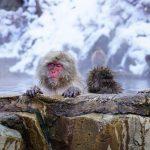 下呂温泉湯めぐり手形の購入場所・おすすめランキングも紹介!